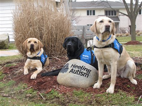 autistic puppy guiding for the blind challenge grant aims to raise 100 000 for heeling autism