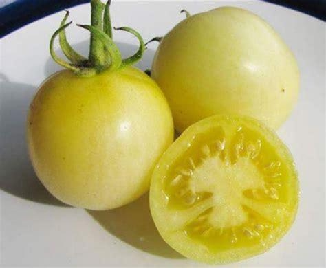Biji Benih Tomat Tomato Benih Tomato Weissbehaarte 5 Biji Non Retail