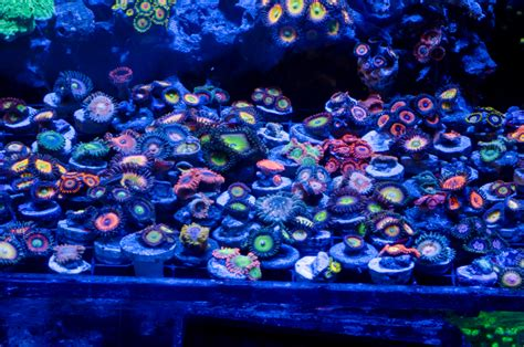 Fish Tank Bed Reefkeeping South Africa 187 Reef Builders The Reef And
