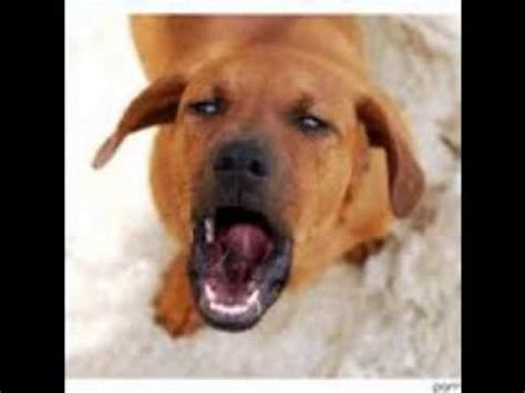 barking sound effects barking pictures photos images breeds picture