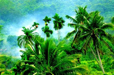 Tropical Zone Botanic Garden Of Bristol Top 10 Attractions In Hainan China China Org Cn
