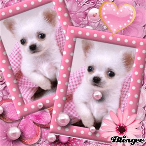 sweet dogs sweet picture 121664299 blingee