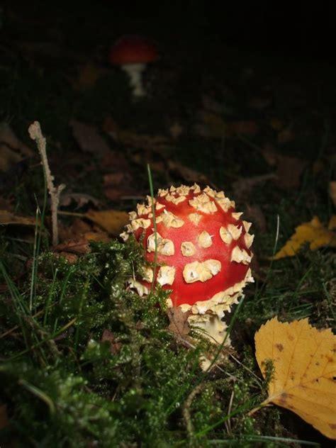 Wie Entstehen Pilze Im Garten by Mosaik Kugelle Meriseimorion