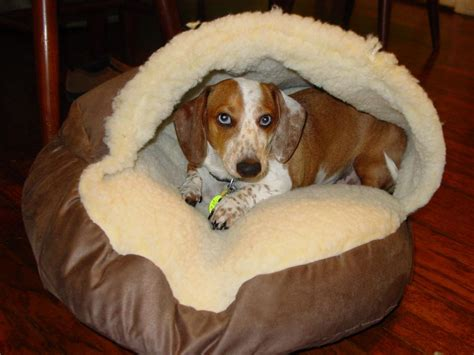 dog bed sale cozy cave dog bed sale diy ideas of cozy cave dog bed dog