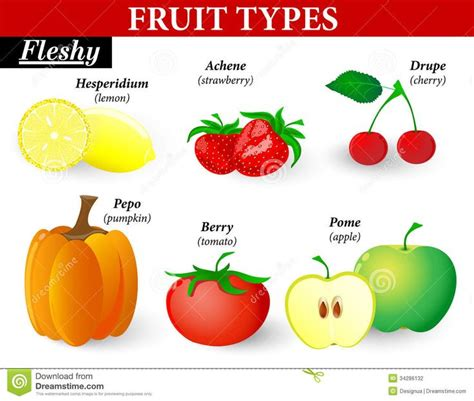 6 fruit categories 7 best images about science lessons on