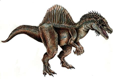 spinosaurus pictures amp facts the dinosaur database