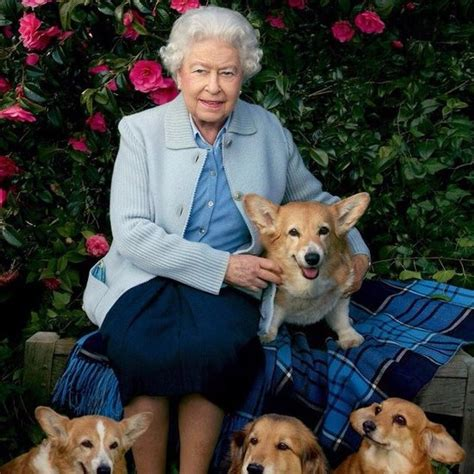 queen elizabeth s corgis dog annoyed while watching movie popsugar australia tech