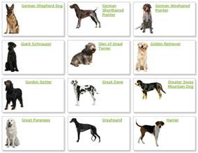 Types Of Dogs All List Of Different Dogs Breeds Breeds List With Picture