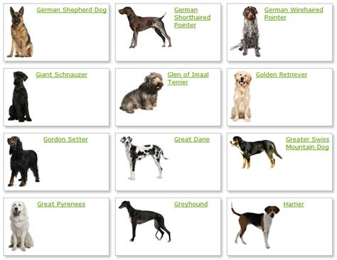 types of purebred dogs all list of different dogs breeds breeds list with