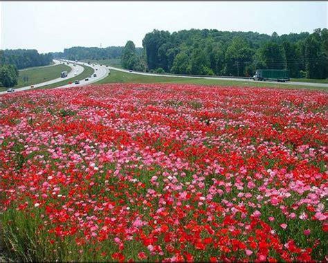 immagini prati fioriti realizzazione prati fioriti in autostrada planeta srl