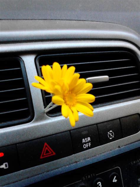 fiore della rinascita il fiore della rinascita storie d arma