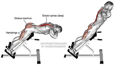 hyperextension exercise and weight