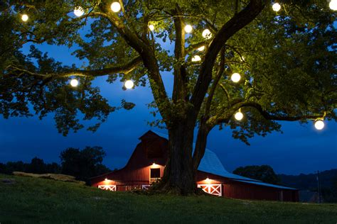 how to string lights on outdoor trees some ideas for outdoor lighting that you should try
