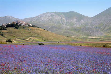 fiorita castelluccio di norcia flowering of castelluccio norcia quot la fioritura quot