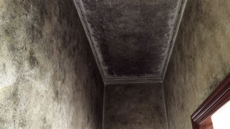 muffa sul soffitto come eliminare la muffa dalle pareti bagno torniamo