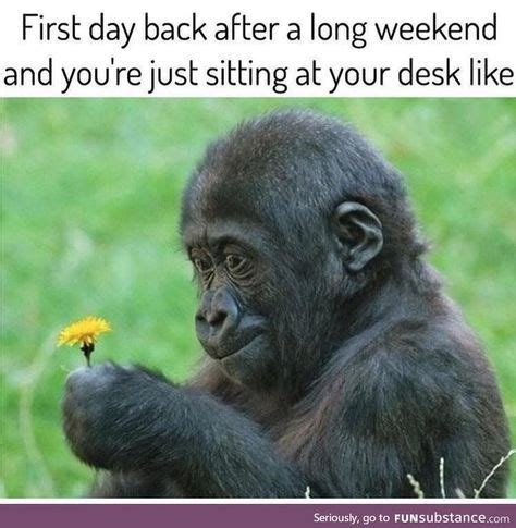 Funny Weekend Memes - 25 best ideas about long weekend meme on pinterest long