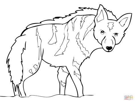 baby hyena coloring page aardwolf from africa coloring online super coloring