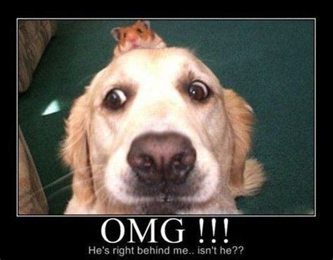 Dog Face Meme - omg its firefox hot memes
