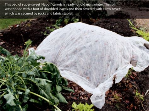 vegetable garden row covers the benefits of using row covers in the garden organic gardening earth news