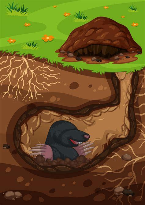 underground mole   tunnel vector   vector
