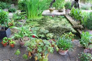 Plants For Wet Conditions - moisture loving plants for wet areas learn about water tolerant plants