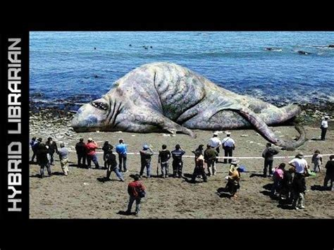 The Amazing Hook Island Sea Monster Photos Revisited image gallery latest sea monster