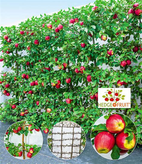 Garten Pflanzen Kaufen by Sichtschutz Pflanzen Kaufen Siddhimind Info