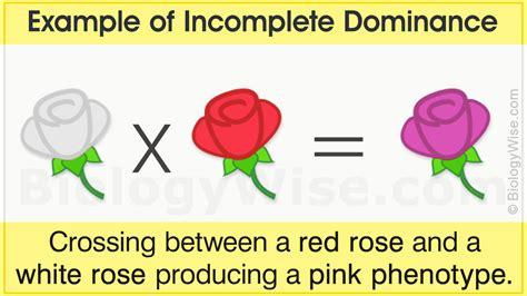incomplete dominance exles