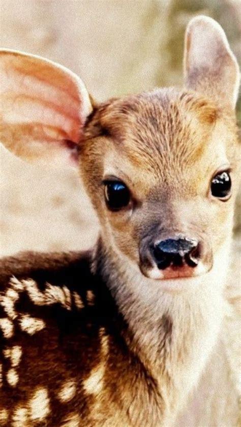baby white tail deer delightful deer cute animals baby animals cute baby animals