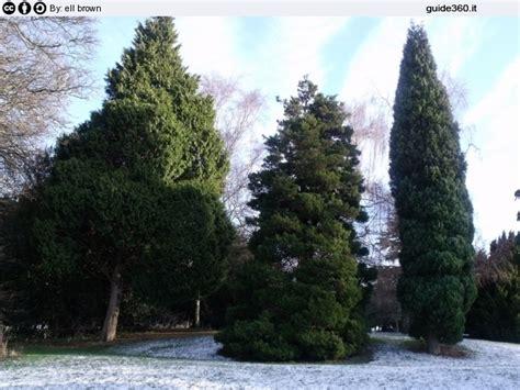 albero da giardino sempreverde alberi sempreverdi