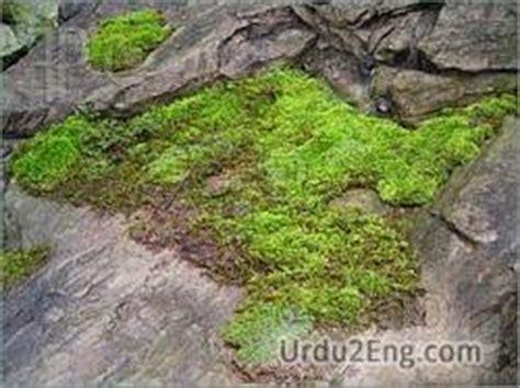 moss urdu meaning