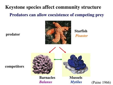 keystone species exles list pictures to pin on