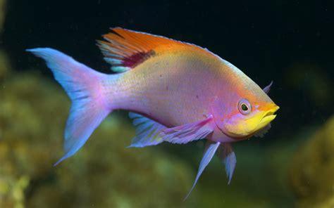 water fish hi i m rocket50 physics forums