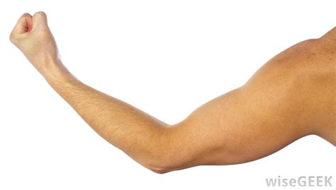 Bilder Arm by The Meaning And Symbolism Of The Word 171 Arm 187