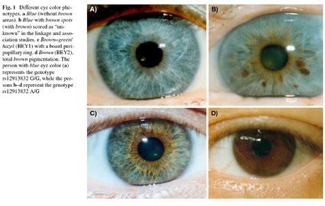 Typical Polish Eye Color