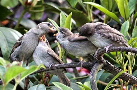 you re next feeding baby sparrows