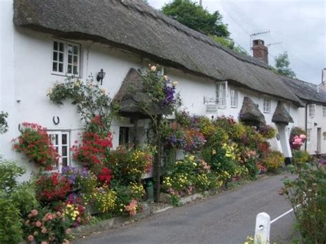 Branscombe Cottages by 25 Best Ideas About Cottages On