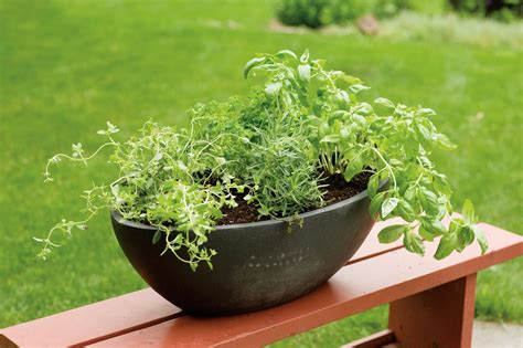 how to grow a herb garden in pots herbs that grow together in containers what herbs will