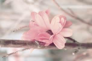 pretty pictures pretty blossom