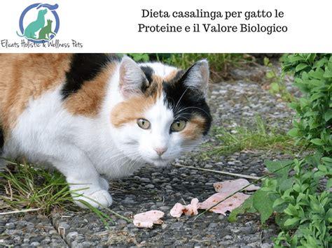 dieta casalinga per il gatto dieta casalinga per gatto le proteine e il valore biologico