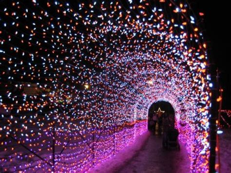brew lights at zoo lights lincoln park chicago the