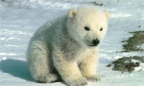 oso polar oso polar oso polar auto design tech