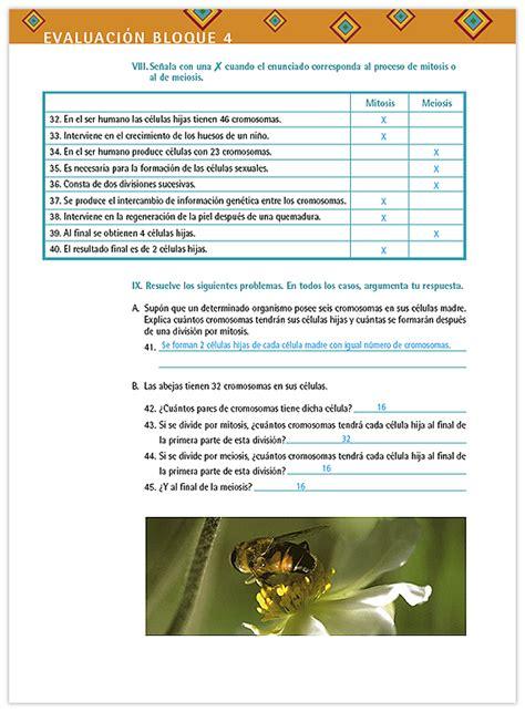 matemticas 3er grado volumen ii by sbasica issuu maestro historia 3er grado volumen ii by sbasica issuu