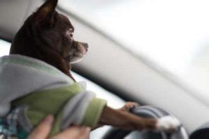 puppy motion sickness 6 important tips for distance traveling with your