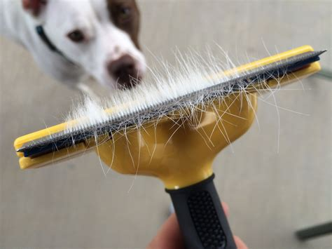 Reducing Shedding by How To Reduce Shedding A Giveaway Lola The Pitty
