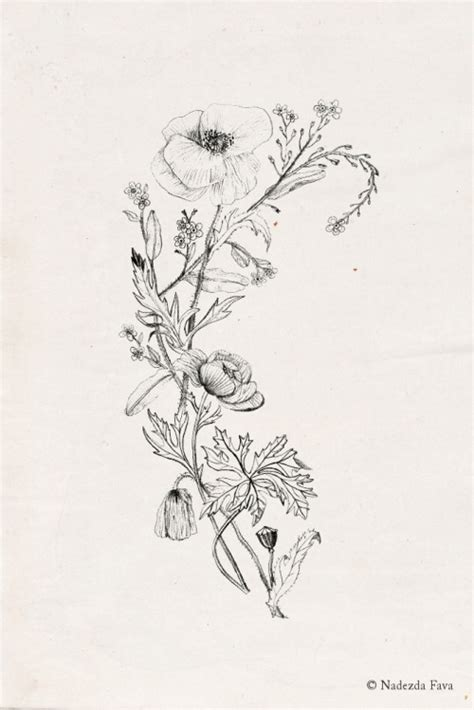 botanical tattoo designs poppy flower