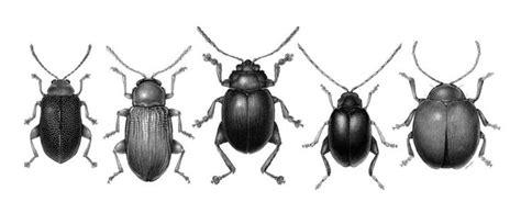 Beetle Sound Recording 50 Best Images About The Depths On No Escape The Depths And Mandalas