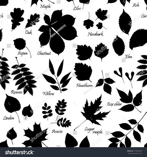 branch name pattern means vector seamless pattern leaves silhouettes names stock