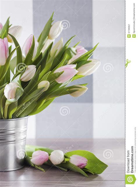 fiori della primavera fiori della primavera immagine stock immagine di fiori