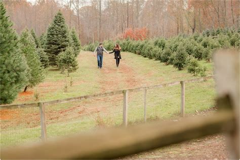 tree farms in south jersey nj tree farm engagement photos krista and craig